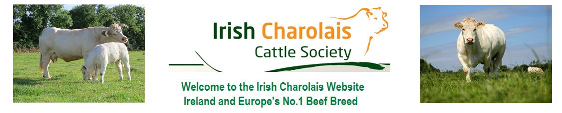 Home - Irish Charolais Cattle Society