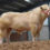 CHAROLAIS FLYING HIGH AFTER BEST PREMIER SALE IN RECENT TIMES