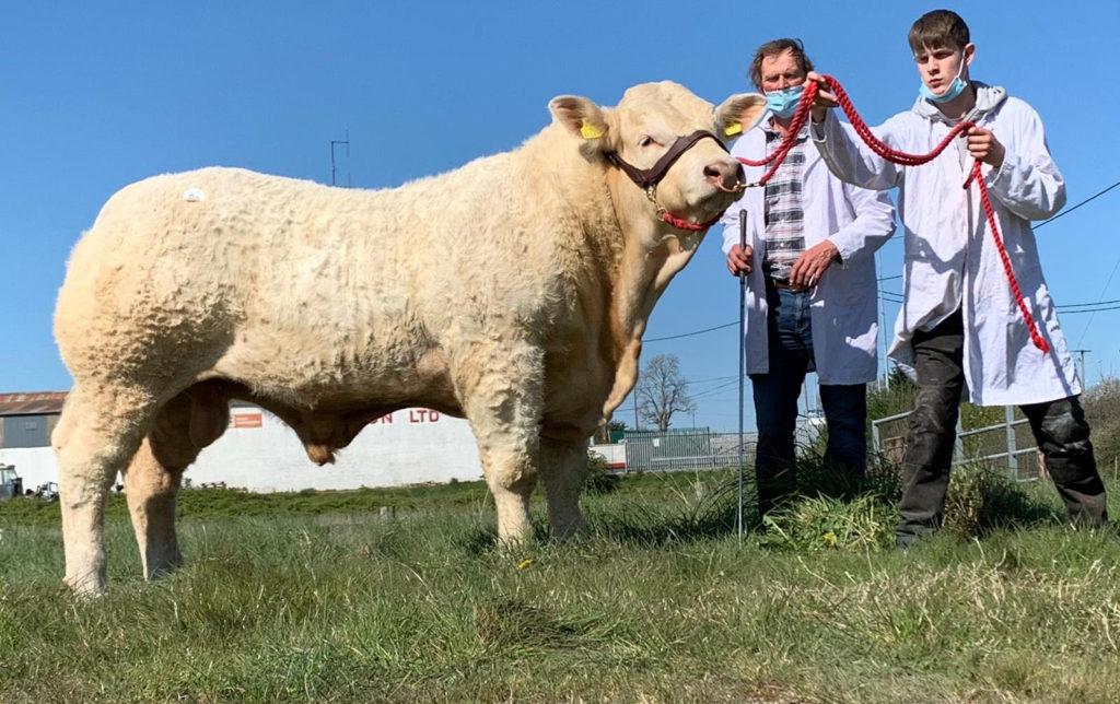 CHAROLAIS BULLS SELL TO €8,000 IN TULLAMORE
