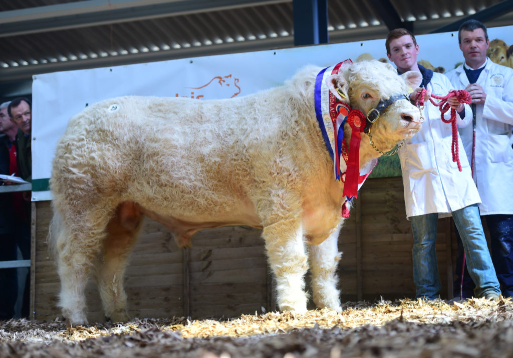 DISPERSAL SALE OF THE SIONHILL PEDIGREE CHAROLAIS HERD